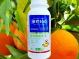 柑橘红蜘蛛防治时期及措施,治红蜘蛛用什么药最有效,长效杀螨剂