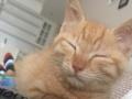 非常可爱的小猫求收养