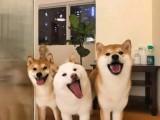 重庆宠物医疗绝育驱虫,细小,皮肤病,犬瘟治疗