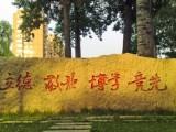 中國傳媒大學自考本科網絡與新媒體專業