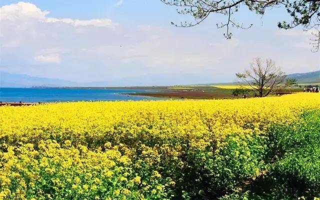 青海湖纯玩线路攻略 夏日度假新选择