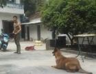 湖州宠物工作犬代训