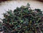 小志茶叶加盟 烟酒茶饮料 投资金额 5-10万元