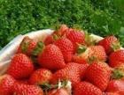 佃户屯生态园绿色蔬果采摘