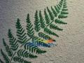 绣时尚墙衣,居家首选,安全环保加盟