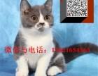 上海最大,最便宜,服务最好的实体店 魔法猫公馆 可上门挑选