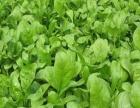 太原周边十多种纯绿色蔬菜水果采摘采一送一