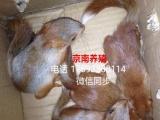 京南雪地魔王松鼠养殖繁育基地批发零售
