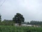 厂房,仓库,农家乐,农作物生产基地