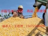 惠侬饲料厂常年大量求购玉米小麦大豆高粱等饲料原料