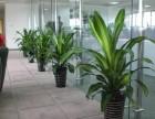 广州市绿植盆栽租摆 办公室植物租摆 园林护理
