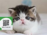 杭州哪里开猫舍卖加菲猫 去哪里可以买得到纯种加菲猫