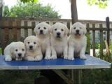 兰州宠物狗领养中心 只需身份证实名领养