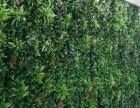 仿真植物墙定做仿真绿植墙做法图片装饰植物墙花墙定做