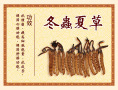 北京回收同仁堂冬虫夏草散装冬虫夏草专业回收东阿阿胶海参瑶柱