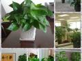 室内绿植花卉租摆 出售,花箱设计,园艺养护