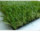 北京塑料仿真草坪批发假草坪出售