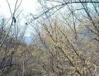 达州市宣汉县30亩其他园地低价急转让