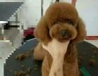 宠物美容师。。。