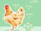 深圳生态草鸡批发零售,达济集团顺丰包邮配送的