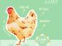 广州土鸡品牌知名度高,价格便宜,包邮配送