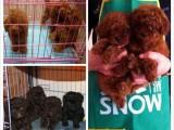 狗场解散 所有狗宝宝们处理 近百只幼犬找人领养