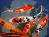 上海水族市场,上海鱼缸专卖,上海锦鲤鱼批发