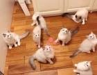 潍坊哪里的布偶猫比较便宜健康 潍坊什么地方可以买到布偶猫