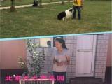 珠市口家庭宠物训练狗狗不良行为纠正护卫犬订单