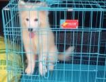 广州哪里有宠物托运