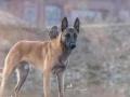 长沙守望者狗狗训练营