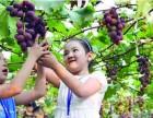秦皇岛昌黎海边农家院住宿旅游--昌黎葡萄沟葡萄采摘