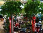 漕河涇花卉租賃租擺漕河涇綠植盆栽植物租擺 植物租賃 室內養護