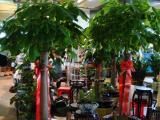 漕河泾花卉租赁租摆漕河泾绿植盆栽植物租摆 植物租赁 室内养护