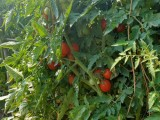 天津宝坻农家自产优质健康大米