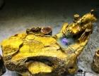 特价黄金樟金丝楠花梨木根雕茶几 整体树根茶桌茶海天然根茶台