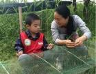 清凉夏日高邮湖上快乐的小渔夫,画鸭蛋 编网兜