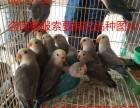 观赏鸟会说话的观赏鸟多少钱一只