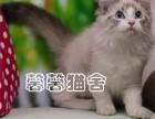 出售纯种布偶猫 加菲猫 美短 英短 折耳猫 金吉拉等猫咪