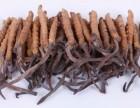 中山回收冬虫夏草-冬虫夏草回收价格