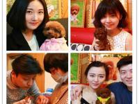 重庆哪里有泰迪卖 博美 蝴蝶犬 比熊吉娃娃 雪纳瑞多少钱价格