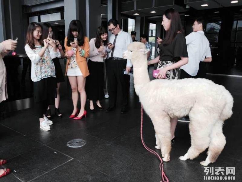 金华特色婚庆策划是哪家?上海启欣展览展示有限公司