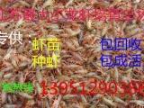 出售淡水小龙虾苗包回收包成活免费提供养殖
