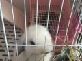 贵阳市寄养兔子鼠类寄养服务