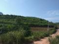 广西凭祥市20公里 土地 1200亩