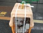 西安地区值得信赖的宠物托运商家,西安傲志