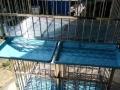 双层不锈钢狗笼展示笼
