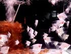 热带观赏鱼活体 绿巨人神仙鱼 燕尾鱼 稀有品种 -