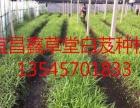 宜昌鑫草堂 种植养殖 投资金额 1-5万元