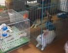 南京桥北免费送养3只兔子